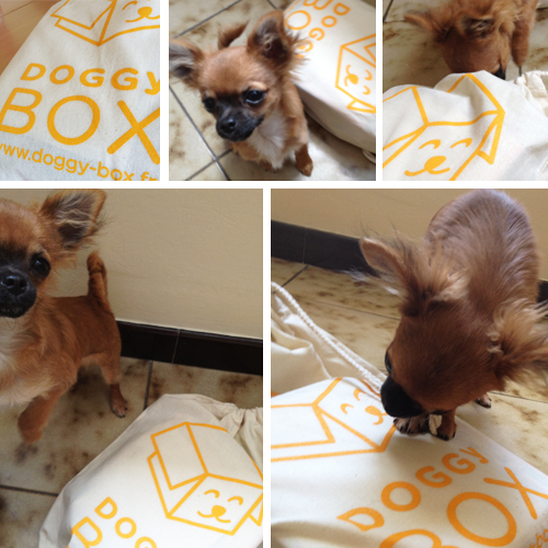 Harybo-et-sa-doggy-box