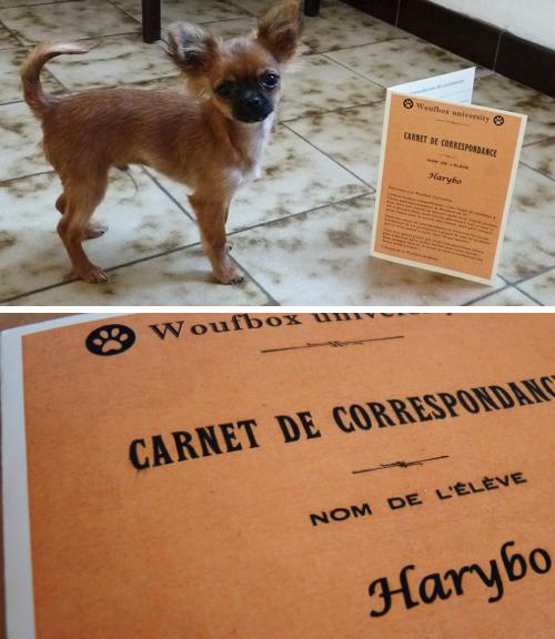 Harybo et son carnet de correspondance Woufbox