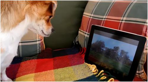Chien-regarde-tv