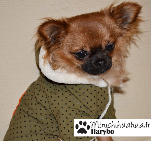 Harybo avec manteau de chez cani-mode