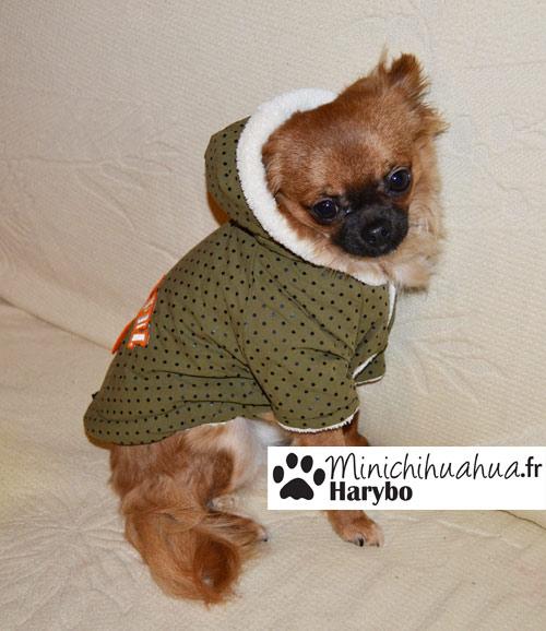 Harybo avec manteau pour chien