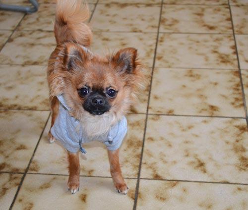 Vêtement pour chien Ohpacha