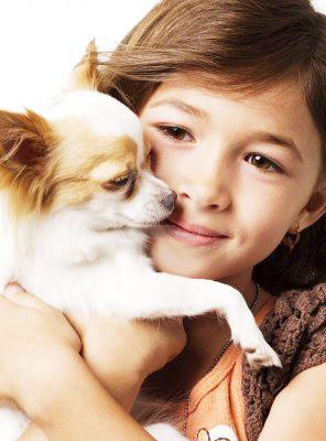 Chihuahua avec enfant