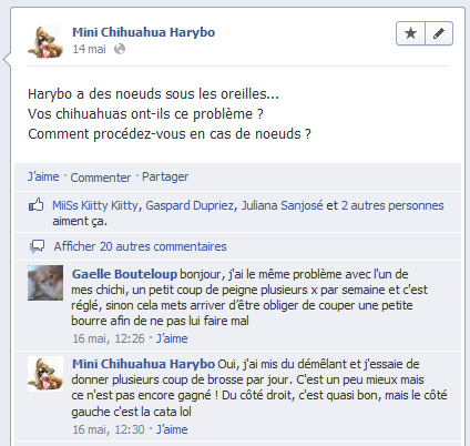 Facebook mini chihuahua harybo