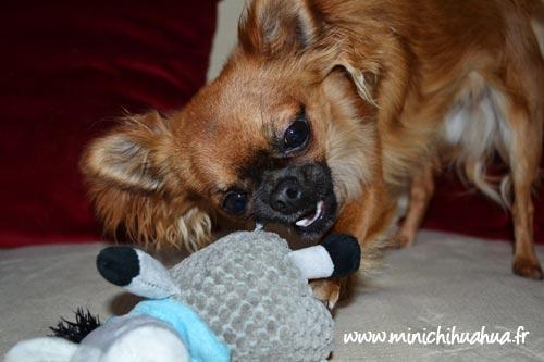 Peluche pour chien Zolux