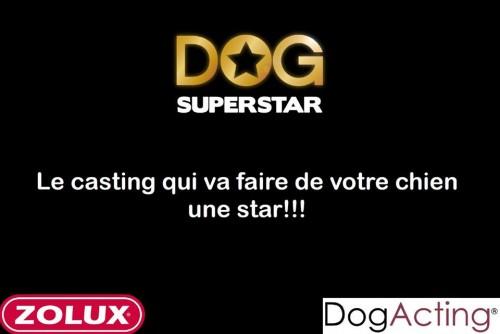 Le casting Dog SuperStar