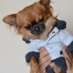 Manteau pour chien pour cet hiver 2014