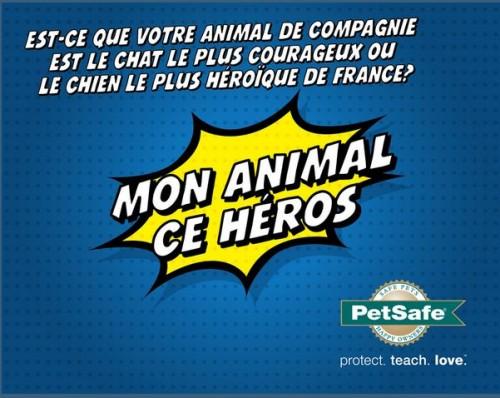 petsafe-concours-animaux