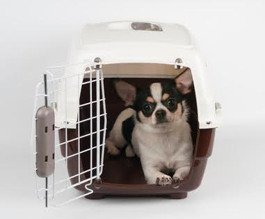 cage chihuahua