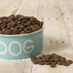 Alimentation Chihuahua : comment nourrir convenablement votre chien ?