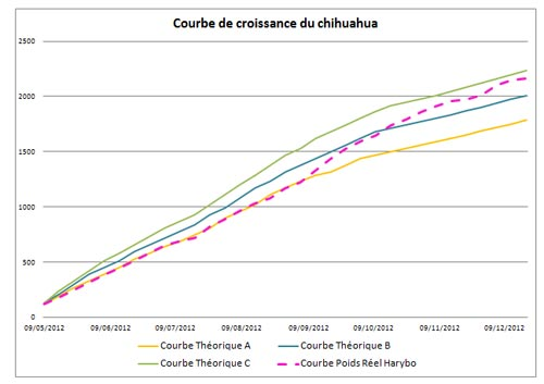 courbe-croissance-chihuahua